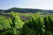 Badenweiler – Lipburg Bild: © K. Schmeißer