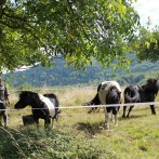 Tiere und Landschaft