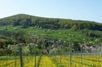 Badenweiler – Lipburg Landschaft Bild: © K. Schmeißer